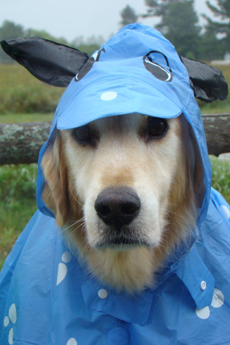 Puppy Dog Tyler