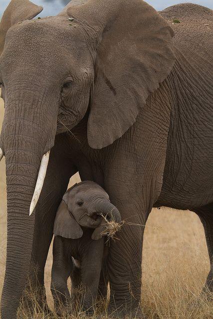 Africa   Elephants in Masai Mara, Kenya   ©Jason Brown