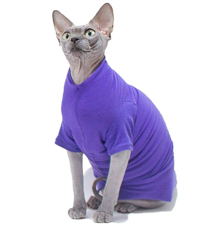 Cat Clothes Purple Tee shirt lightweight 4-way Stretch Cat Clothes, Dog Clothes. Choose short or long sleeves. by SimplySphynx on Etsy