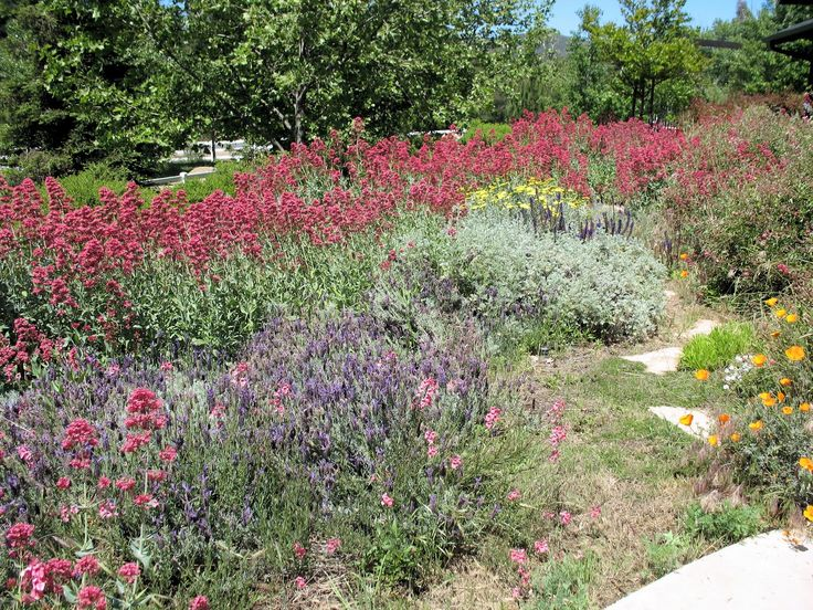 Pid 16573145 also The Tale Of Two Green Streets 2 moreover Drou Ght Tolerant Plant Lists additionally Front Yard Landscaping Ideas Small House as well East Bay Mud. on coastal california drought tolerant landscaping
