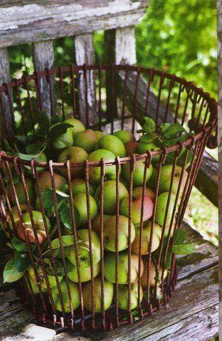 Wire Basket . enfantsdumarais.canalblog.com