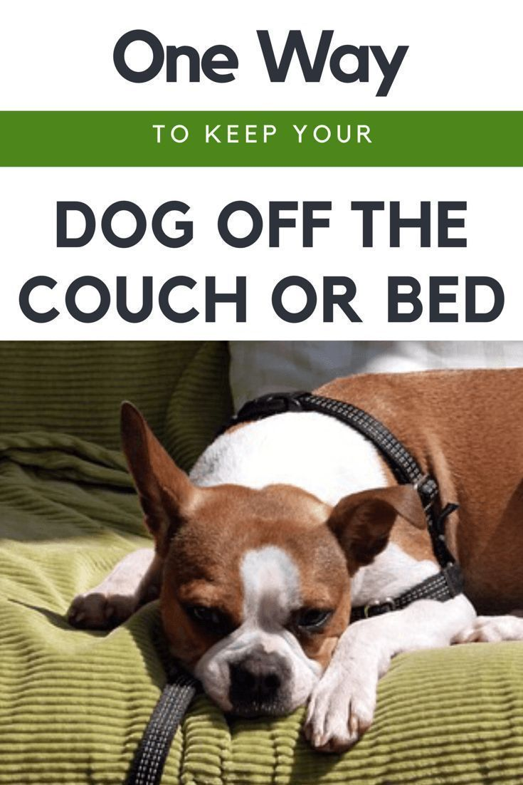 Simple Tips On How To Keep Your Dog Off The Couch Bed Keep Dog