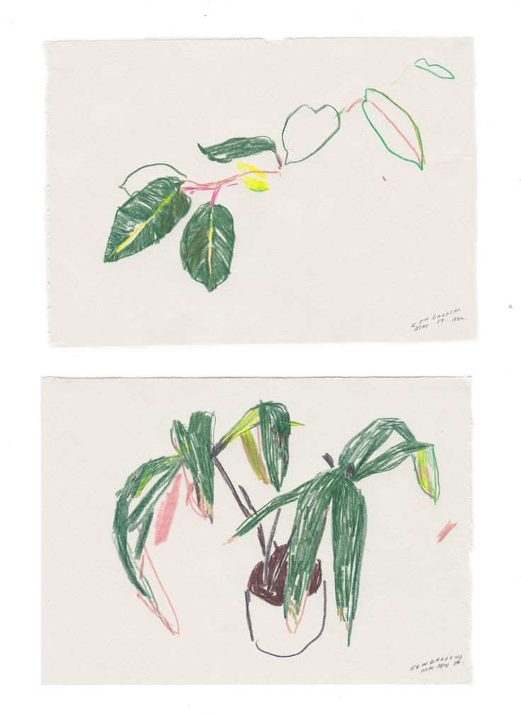 Drawings for Trailing Garden's - A Gardening company.