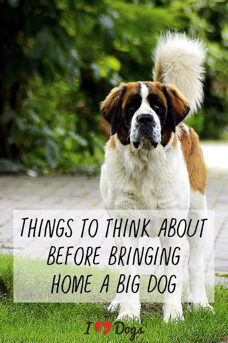 10 Things To Think About Before Bringing Home A Big Dog Big Dogs