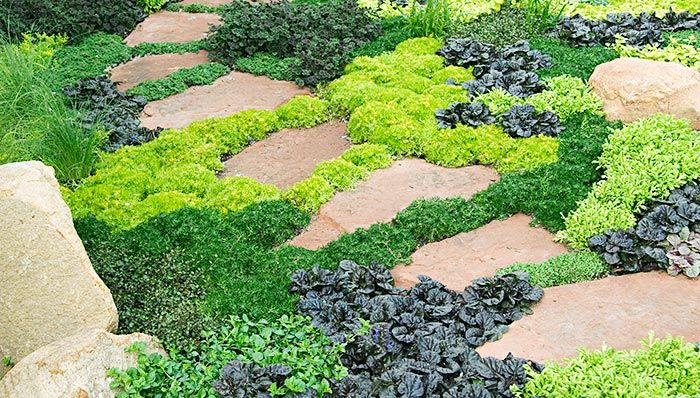 Ajuga, Creeping Jenny (Lysimachia nummularia), Scotch Moss, Carex, Dutch Clover (Trifolium repens), & Golden Pearlwort (Sagina subulata)