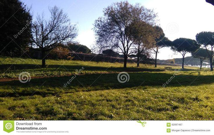 Parco Degli Acquedotti - The long shadows of trees over the grass of Parco degli Acquedotti in Rome, Italy. Photo taken on: November 29th, 2015
