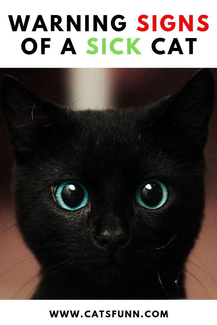 8 Warning Signs Of A Sick Cat Sick Cat Cats Best Cat Food