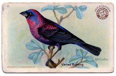 bird advertising card printableVintage Graphics, Graphics Fairy, Vintage Birds, Advertising Cards, Pretty Birds, Birds Advertising, Baking Soda, Vintage Image, Graphics Fairies