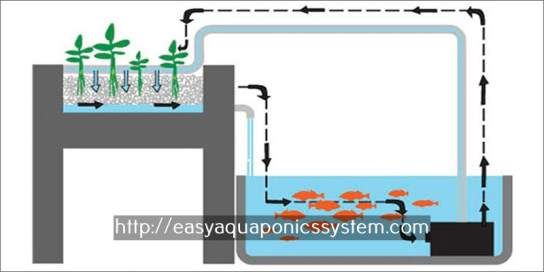 commercial aquaponics systems for sale - aquaponic grow beds for sale.aquaponic herb garden 7814844971