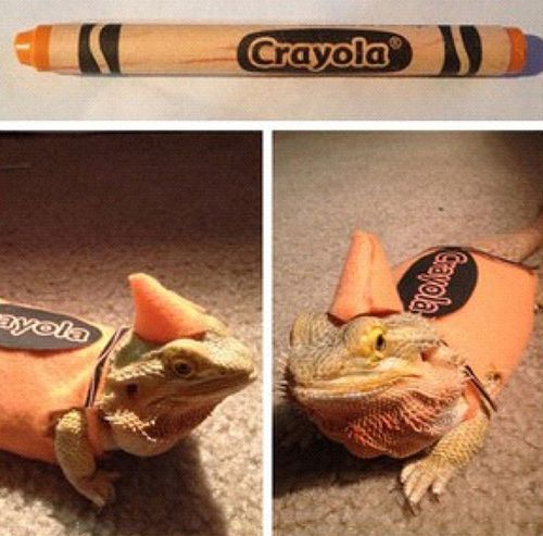 image result for bearded dragon halloween costumes bearded dragon pet pinterest dragon halloween costume bearded dragon and dragons