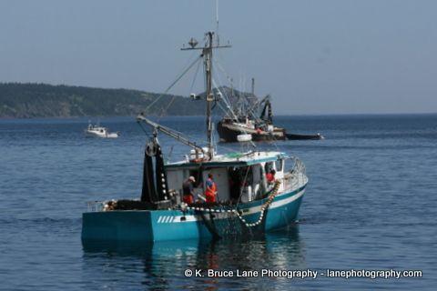 Capelin fishermen at work. Holyrood, Newfoundland and Labrador