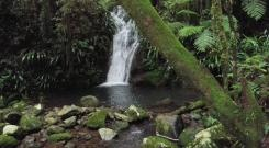 Lamington National Park , the rainforest of the Gold Coast sits in the hinterlands that frame the skyline, home to creeks and waterfalls.
