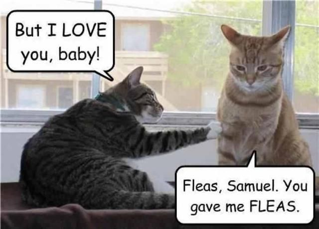You gave me fleas.