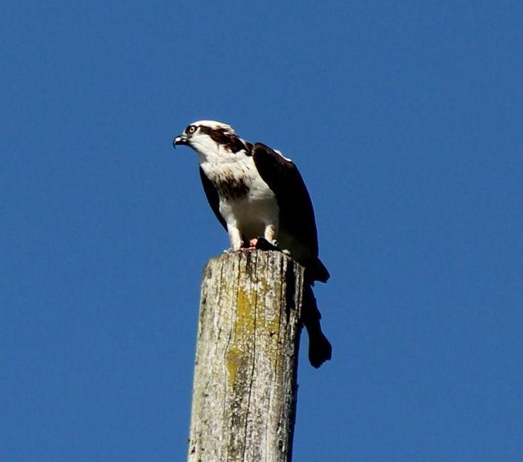 18 best best birding bay area images on pinterest bay for Lake temescal fishing