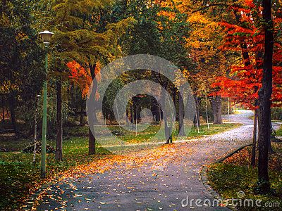 Vibrant winding road through the woods
