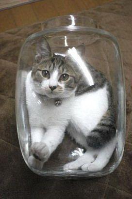 8 Best Bonsai Kitten Images On Pinterest Baby Kittens
