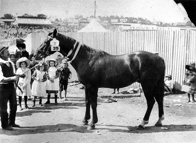 Children admiring a prize winning horse at the Ekka, Brisbane, ca. 1906, via Flickr.