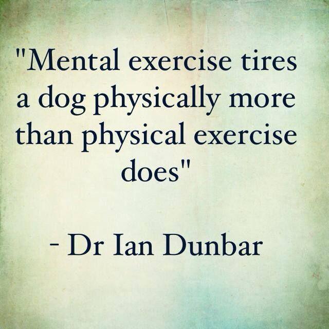 Ian Dunbar Dog Training Tips