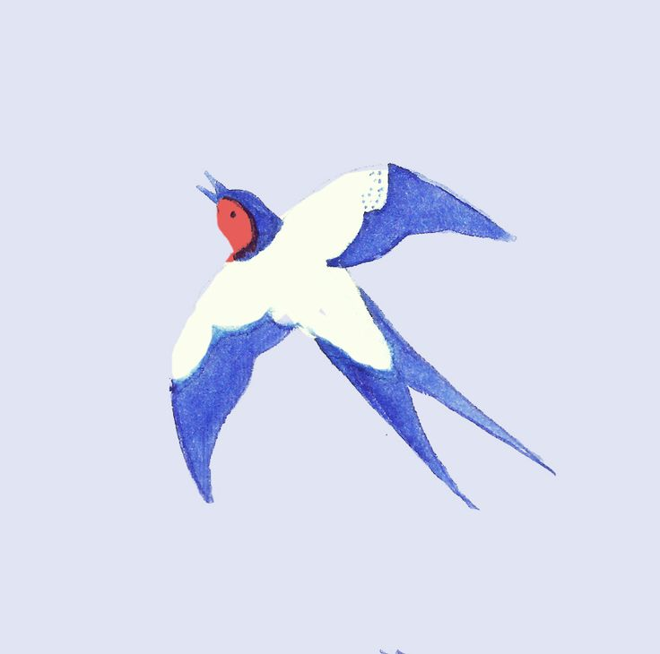 Swallow  illustration for Ładnebebe Paulina Derecka