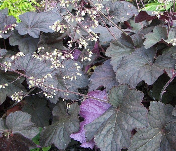 84 besten pflanzenpflege bilder auf pinterest gartenpflanzen blumen und diy garten. Black Bedroom Furniture Sets. Home Design Ideas