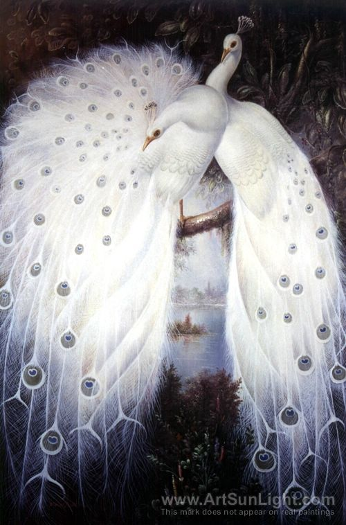 White peacocks Order an oil painting of your pet now at www.petsinportrait.com