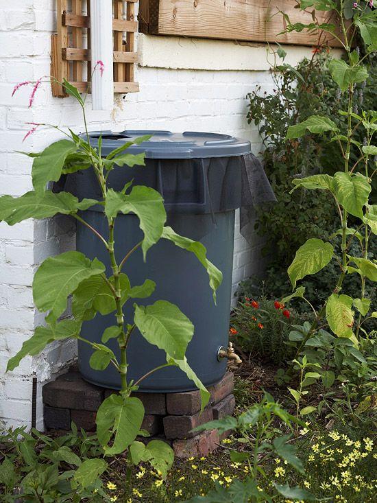 make your own rain barrelGardens Ideas, Rain Barrels, Outdoor, Saving Water, Landscapes, Rain Water, Rainwater, Yards, Diy Rain