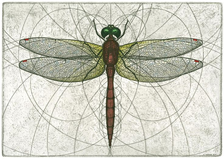 Ruby Meadowhawk Dragonfly Painting by Charles Harden - Ruby Meadowhawk Dragonfly Fine Art Prints and Posters for Sale