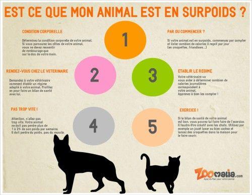 Voici les étapes essentielles en #infographie pour lutter contre #obesite de votre #animal http://www.zoomalia.com/blog/article/chien-chat-obese-surpoids.html