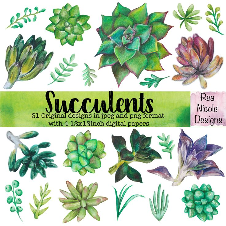 Succulents Clipart - Hand drawn watercolor clipart, perfect for scrapbooks,digital projects,planners,craft projects, printable art by ReaNicoleDesigns on Etsy