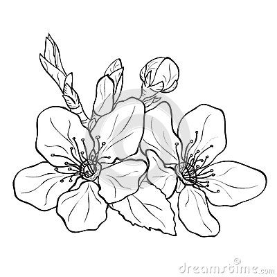 Best 25 flower sketches ideas on pinterest flower drawings art drawings sketches and pen doodles - Dessin fleur cerisier ...