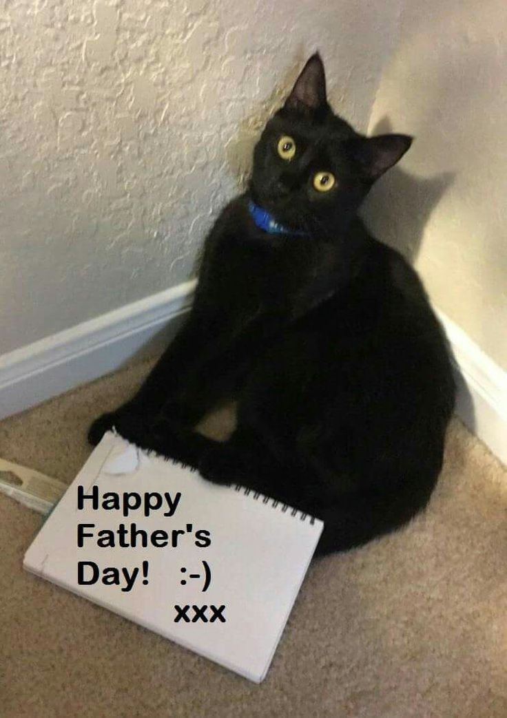 29 best catsmotherfather day images on pinterest kittens kitty father cats pai kitty cats gatos cats and kittens cat kittens sciox Gallery