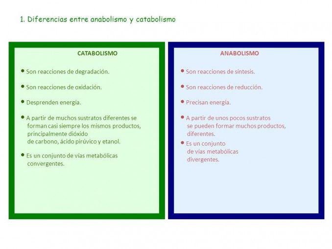 Anabolismo Y Catabolismo Diferencias Ejemplos Cuadro Comparativo Anabolismo Auxiliar De Enfermeria Hormona Del Crecimiento
