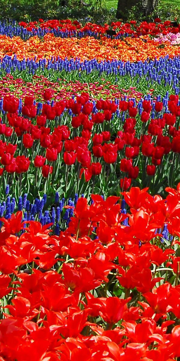オランダ キューケンホフ公園(Keukenhof the Netherlands)