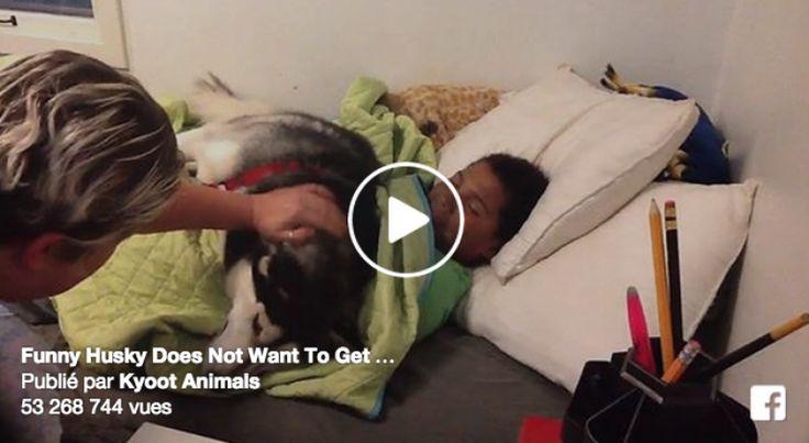 Le chien refuse que le garçon sorte de son lit