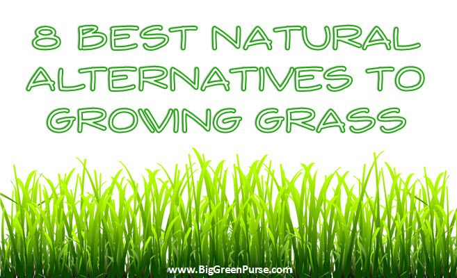 Growing grass can be costly and require high maintenance. Here are some alternatives.