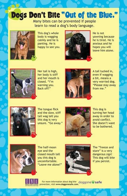 """Ambassador Pit Bull Rescue  """"I'm warning you - back off!"""" If a person said this, you would listen up! But what about a dog? Do you know how to listen to what their body language is telling you?  More great resources from Doggone Safe for dog bite prevention week!"""