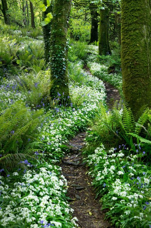 25+ Best Ideas About Forest Garden On Pinterest