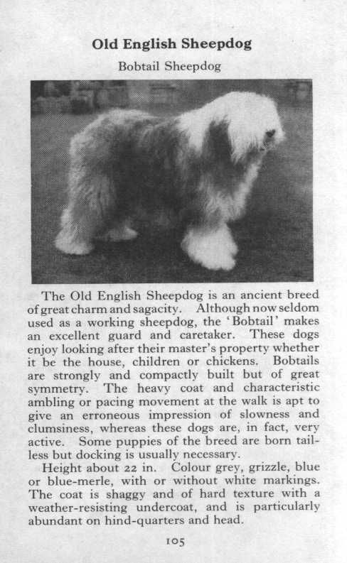 old english sheepdog breed description this original page comes from a 1970 book of pedigreed