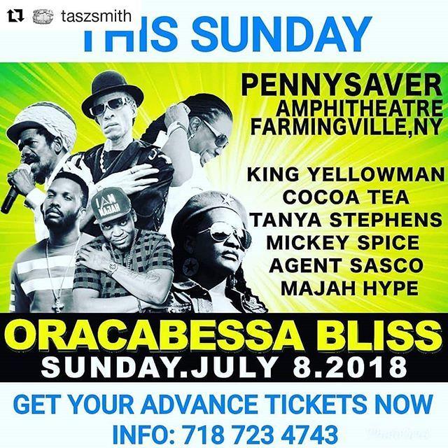 Pin On Reggae Festival Show Photos
