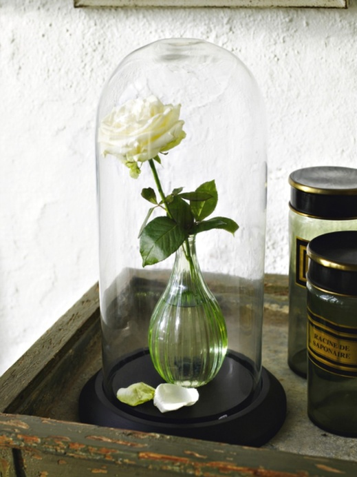 Beauty and the beast belle jar with living rose