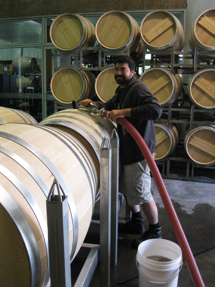 Ricco pumps the first of the Trinithy Hill chardonnay into the puncheon Harvest 2012 (Hawkes Bay, NZ)