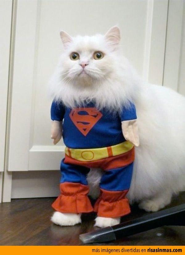 Supercat.