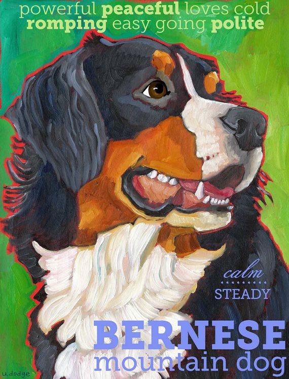 Bernese Mountain Dog No 1  art poster 13x19 from by ursuladodge, $42.00