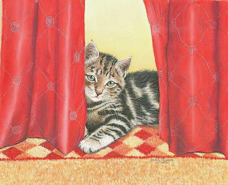 gattino fra le tende rosse
