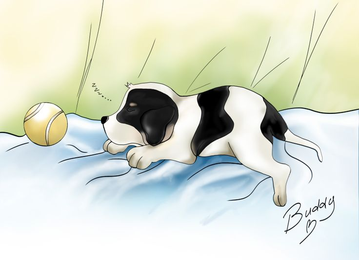 This is my dog in version cartoon