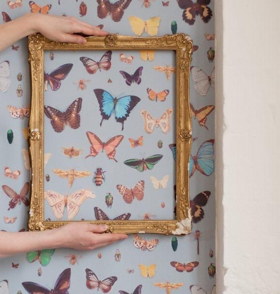 Ella Doran - Bugs and Butterflies Wallpaper