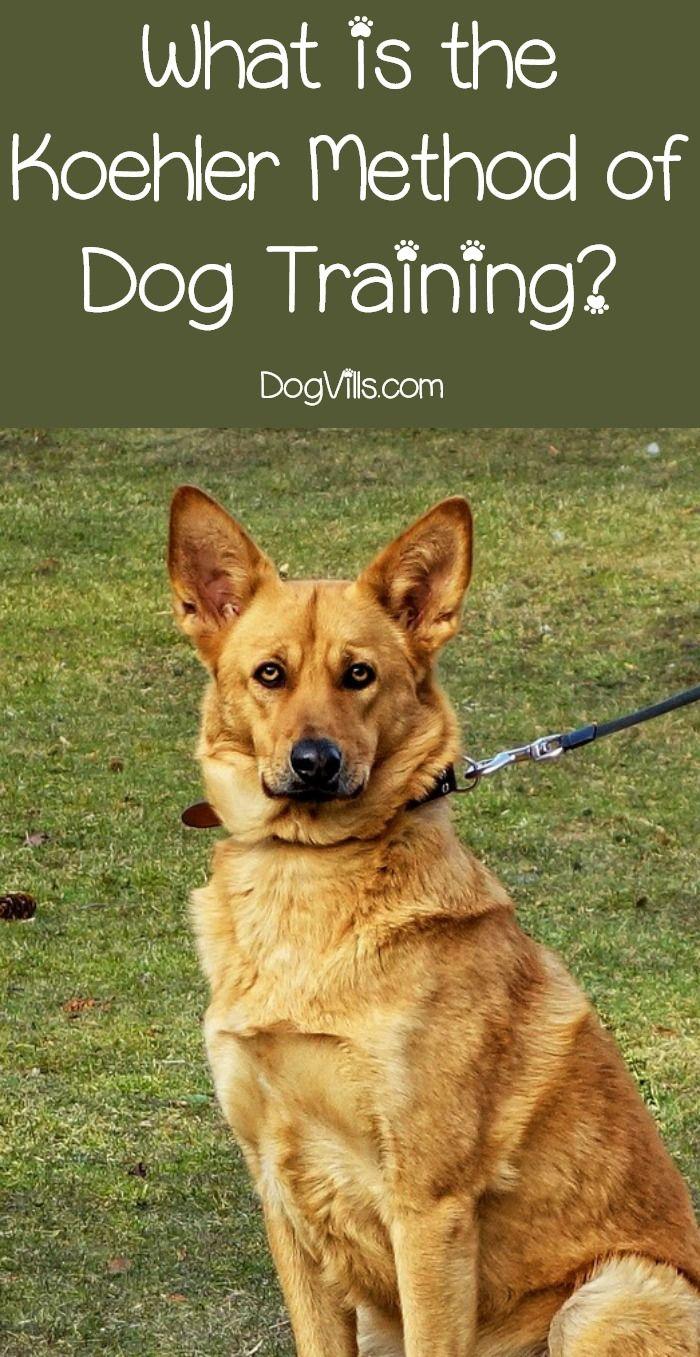 What Is The Koehler Method Of Dog Training Dogtraining Dog