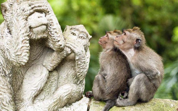 Aapjes in het Monkey Forest bij Ubud. Boek nu de mooiste huwelijksreizen, gezinsvakanties en privérondreizen op Bali met Original Asia! Rondreis - Vakantie - Indonesië - Bali - Ubud - Monkey Forest - Natuur - Apen