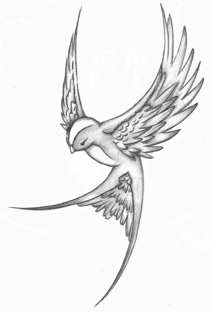 Love the shape/positioning of this bird. Like a traditional swallow tattoo with…