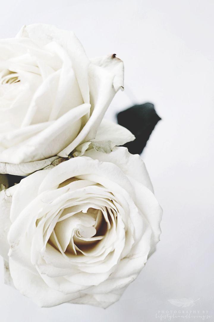 White roses. //